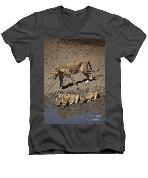 Lion Cubs And Mom Get A Drink Men's V-Neck T-Shirt by Darcy Michaelchuk