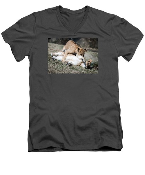 Lion Cubs At Play Men's V-Neck T-Shirt by Cathy Donohoue