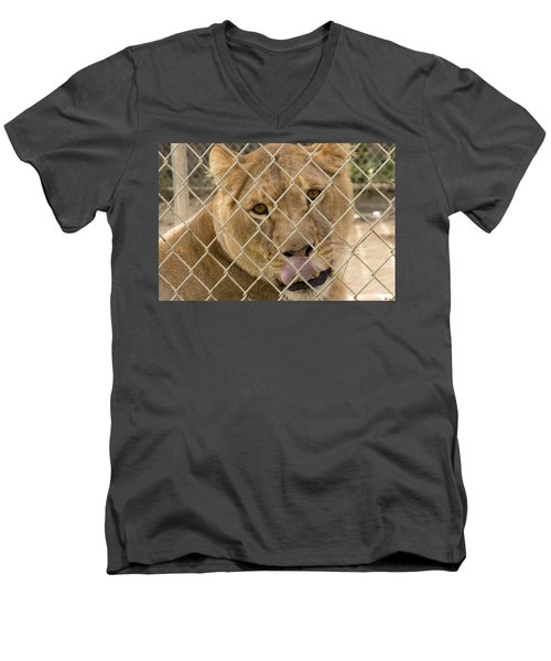 Lioness Licks Men's V-Neck T-Shirt