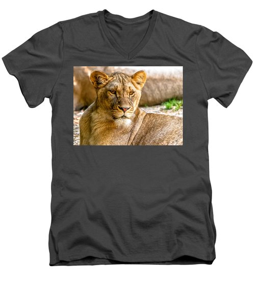 Lioness Men's V-Neck T-Shirt