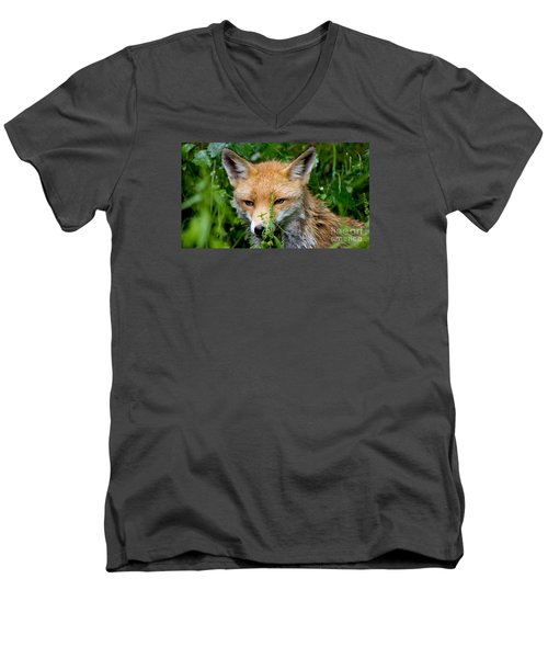 Little Baby Fox Men's V-Neck T-Shirt