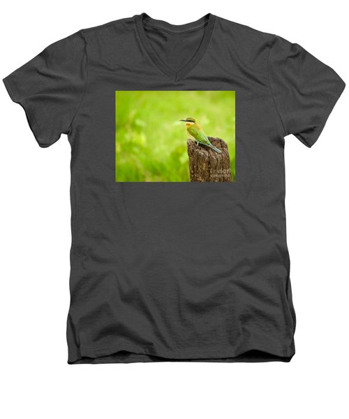 Little Green Bee-eater Men's V-Neck T-Shirt