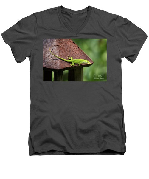 Lizard On Lantern Men's V-Neck T-Shirt