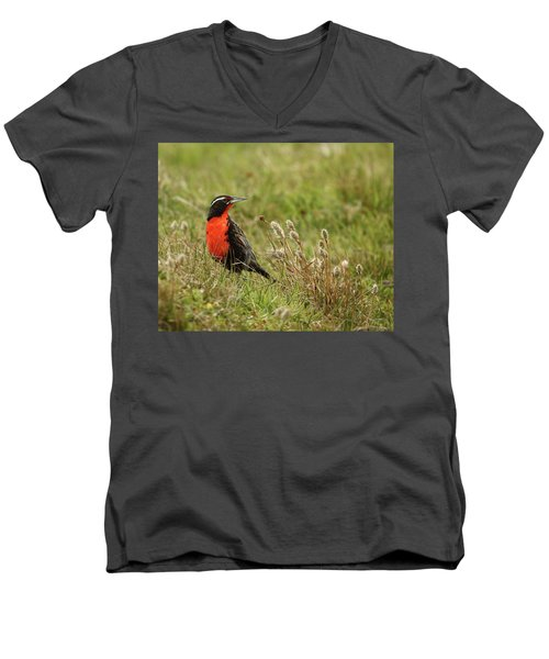 Long-tailed Meadowlark Men's V-Neck T-Shirt by Bruce J Robinson