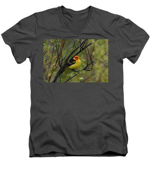 Looking At You - Western Tanager Men's V-Neck T-Shirt