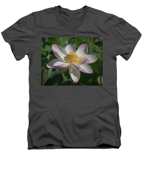 Lotus Flower In Bloom Men's V-Neck T-Shirt