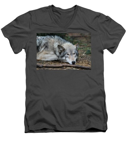 Men's V-Neck T-Shirt featuring the photograph Lying In Wait by Laddie Halupa