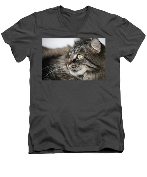 Maine Coon Cat Men's V-Neck T-Shirt by Mary-Lee Sanders