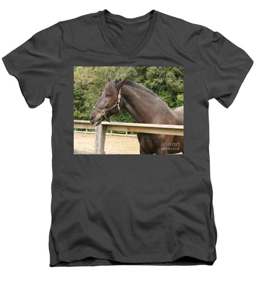 Majestic Horse  Men's V-Neck T-Shirt