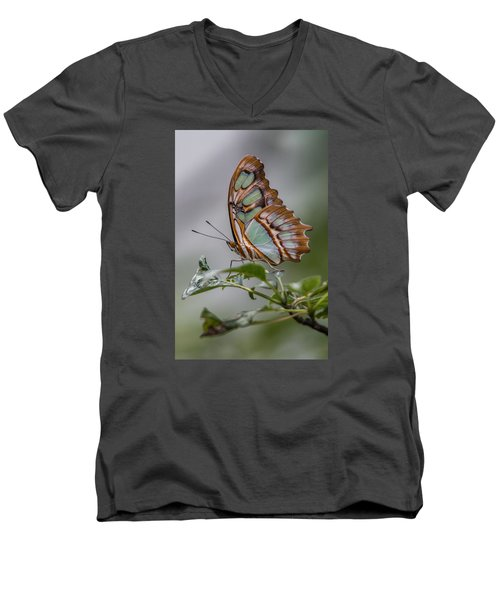Malachite Butterfly Profile Men's V-Neck T-Shirt