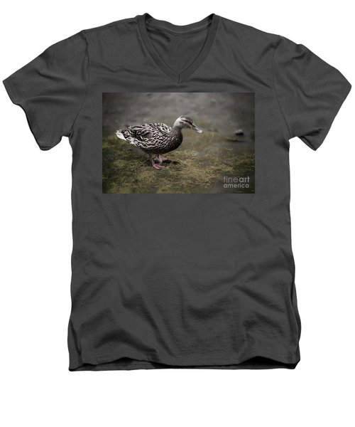 Malard,duckling Men's V-Neck T-Shirt