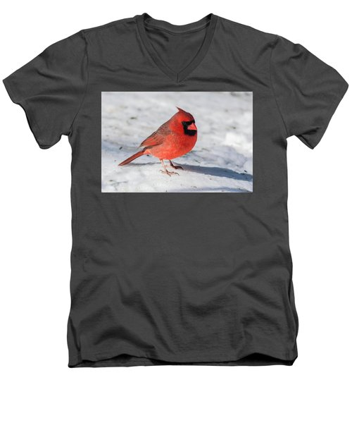 Male Cardinal In Winter Men's V-Neck T-Shirt by Kenneth Cole