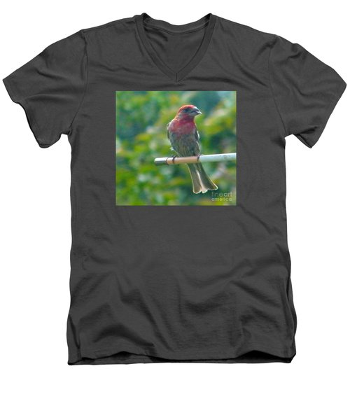 Male Crossbill With Sunflower Seed    August  Indiana Men's V-Neck T-Shirt by Rory Cubel