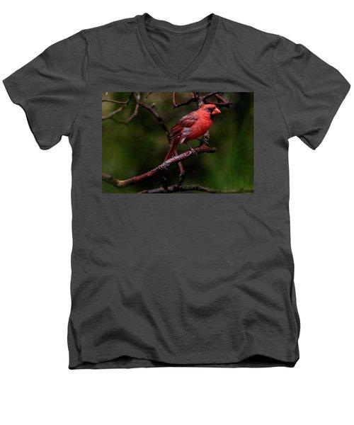 Male Northern Cardinal Men's V-Neck T-Shirt