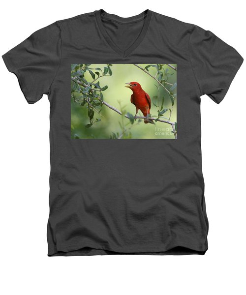 Male Summer Tanager Men's V-Neck T-Shirt