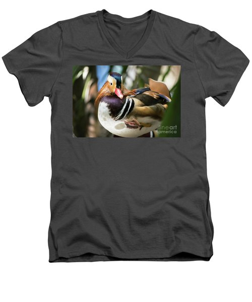 Mandarin Duck Raising One Foot. Men's V-Neck T-Shirt