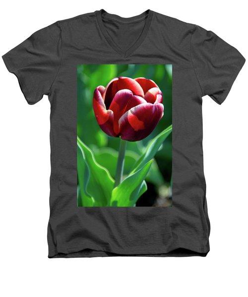 Maroon Tulip Men's V-Neck T-Shirt