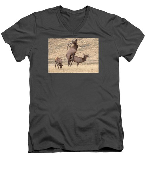 Mating  Men's V-Neck T-Shirt by Kelly Marquardt