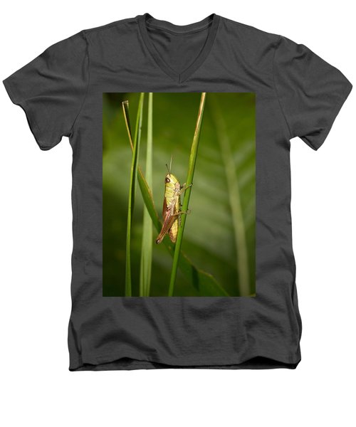 Men's V-Neck T-Shirt featuring the photograph Meadow Grasshopper by Jouko Lehto