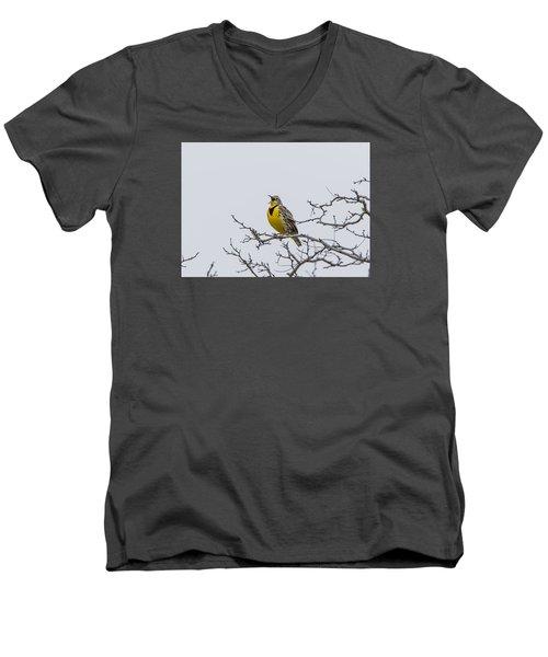 Meadowlark In Tree Men's V-Neck T-Shirt by Marc Crumpler
