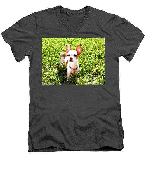 Mini Dog Men's V-Neck T-Shirt by Josy Cue