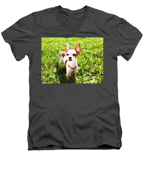 Mini Dog Men's V-Neck T-Shirt