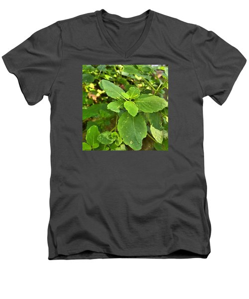 Men's V-Neck T-Shirt featuring the photograph Minnesota Plant Life by Lisa Piper