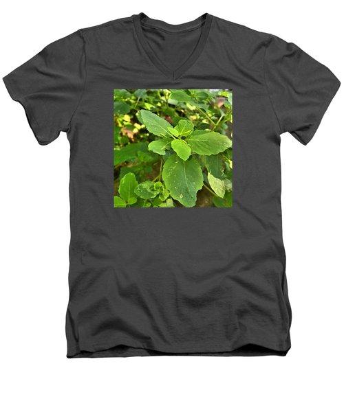 Minnesota Plant Life Men's V-Neck T-Shirt