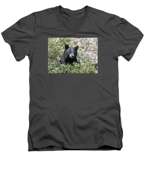 Men's V-Neck T-Shirt featuring the photograph Momma Black Bear Eating Berries by Stephen  Johnson