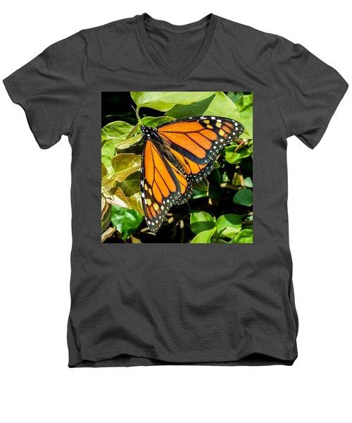 Monarch Men's V-Neck T-Shirt by Mark Barclay