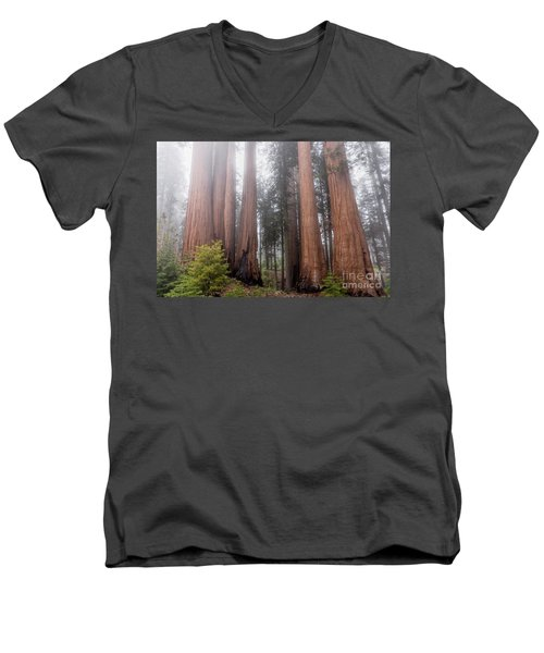Men's V-Neck T-Shirt featuring the photograph Morning Light In The Forest by Peggy Hughes
