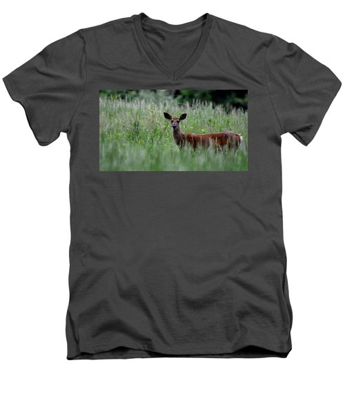 Morninng Deer Men's V-Neck T-Shirt