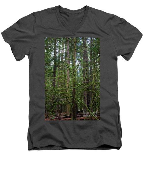 Moss Covered Tree Men's V-Neck T-Shirt