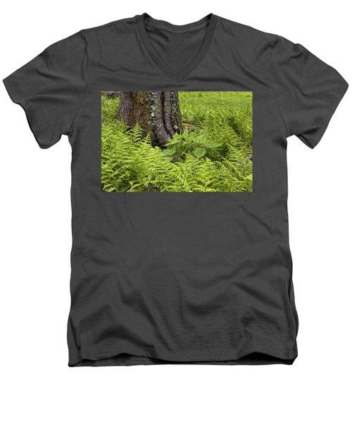 Mountain Green Ferns Men's V-Neck T-Shirt