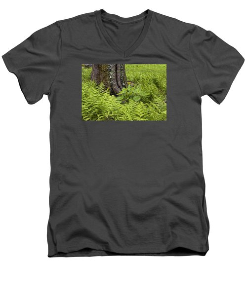 Mountain Green Ferns Men's V-Neck T-Shirt