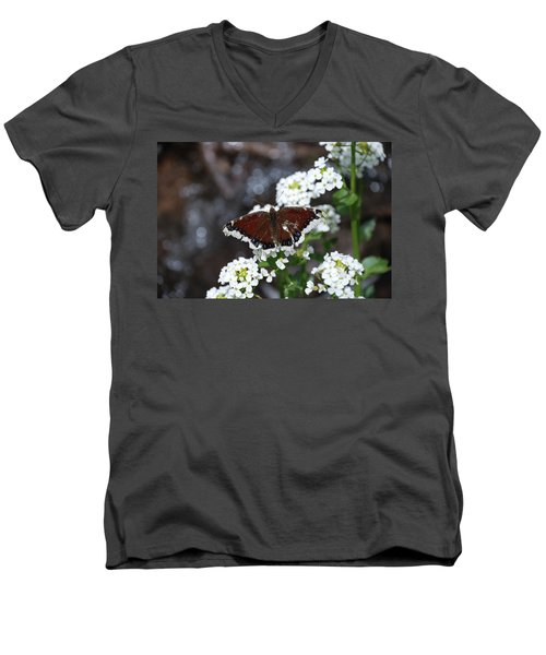 Mourning Cloak Men's V-Neck T-Shirt by Jason Coward