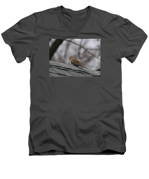 Mourning Dove 20120318_1a Men's V-Neck T-Shirt by Tina Hopkins