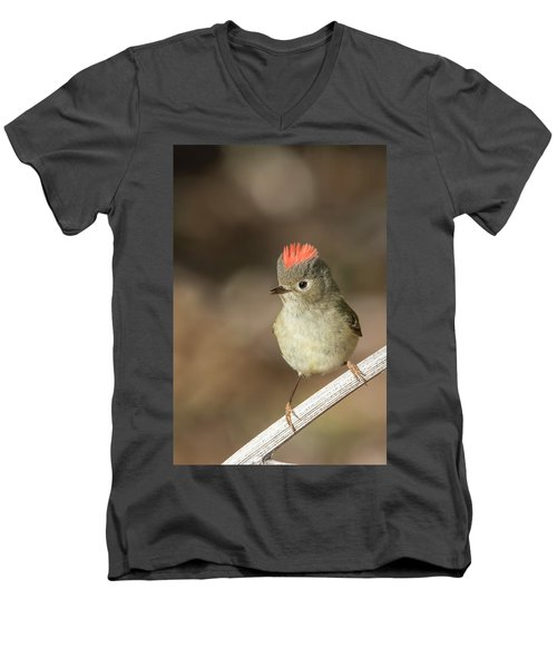 Men's V-Neck T-Shirt featuring the photograph Mr Kinglet  by Mircea Costina Photography