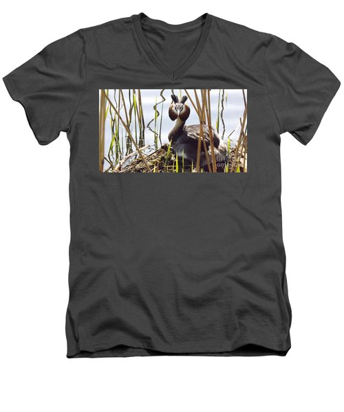 Nesting Grebe Men's V-Neck T-Shirt