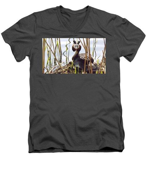 Nesting Grebe Men's V-Neck T-Shirt