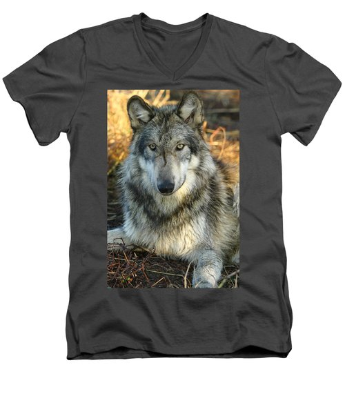 Men's V-Neck T-Shirt featuring the photograph Noble Lupine by Shari Jardina