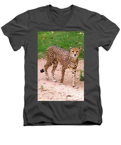 North African Cheetah Men's V-Neck T-Shirt