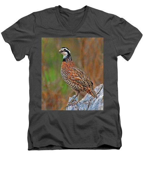 Northern Bobwhite Men's V-Neck T-Shirt by Dave Mills