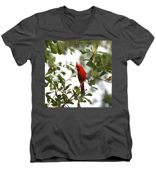 Northern Cardinal - In The Wind Men's V-Neck T-Shirt by Travis Truelove