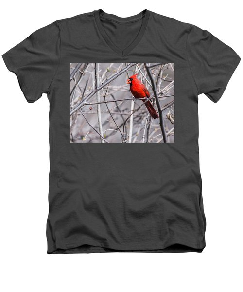 Northern Cardinal Feeding Men's V-Neck T-Shirt