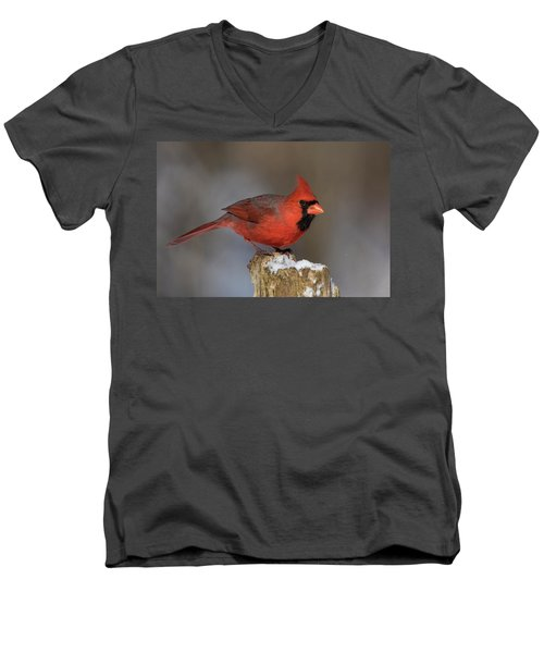 Men's V-Neck T-Shirt featuring the photograph Northern Cardinal In Winter by Mircea Costina Photography