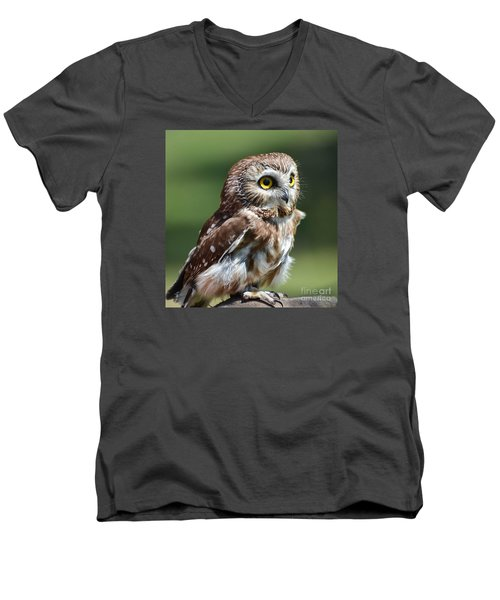 Northern Saw Whet Owl Men's V-Neck T-Shirt