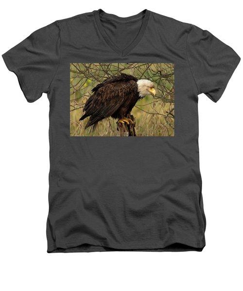 Old Eagle Men's V-Neck T-Shirt by Sheldon Bilsker
