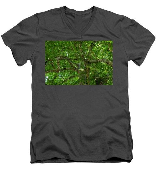 Old Linden Tree. Men's V-Neck T-Shirt
