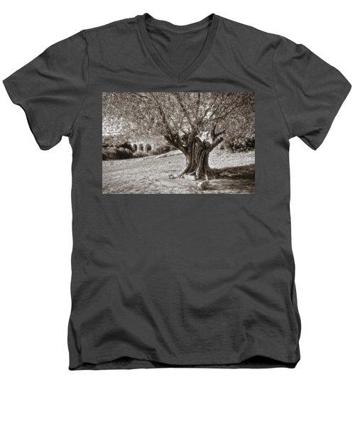 Olivo Men's V-Neck T-Shirt